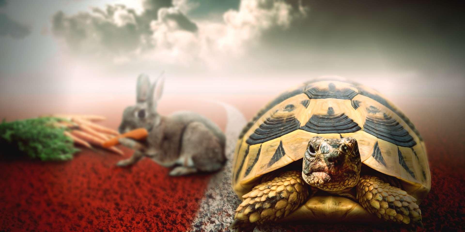 Une fois encore, il semblerait que les espèces marines soient plus aptes à gagner la course. Bien que certaines tortues soient entièrement terrestres. © Funstarts33, Adobe Stock