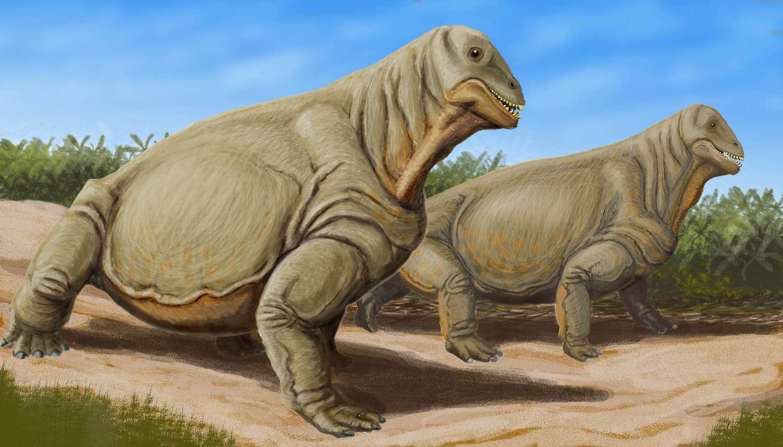 Illustration d'un Dinogorgon rubigei qui vivait en Afrique du Sud à la fin du Permien, il y a plus de 252 millions d'années. À cette période, environ 70 % des tétrapodes disparurent en quelques centaines de milliers d'années. Ce fut l'extinction massive la plus importante et rapide que la Terre ait connue. © Dmitry Bogdanov, Wikimedia Commons, CC by 3.0