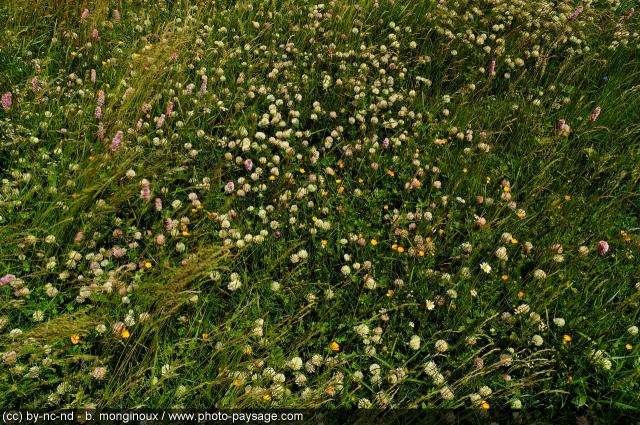 Le cortège floristique des plaines accueille de nombreux insectes et oiseaux. © Bruno Monginoux / Landscape-Photo.net CC by-nc-nd