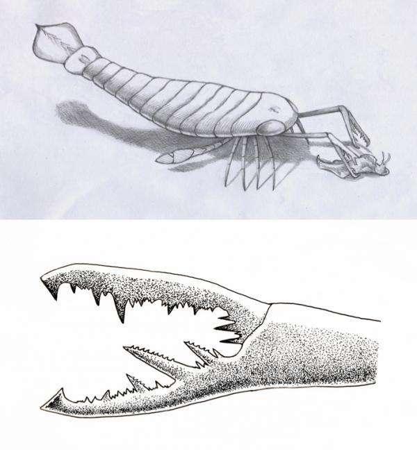 Une représentation d'artiste d'un scorpion de mer en train de saisir une proie au fond de l'eau. En dessous, un dessin d'un des chélicères, des appendices buccaux que possèdent aujourd'hui, notamment, les acariens, les araignées, les limules et les scorpions. © William L. Parsons/Buffalo Museum of Science.