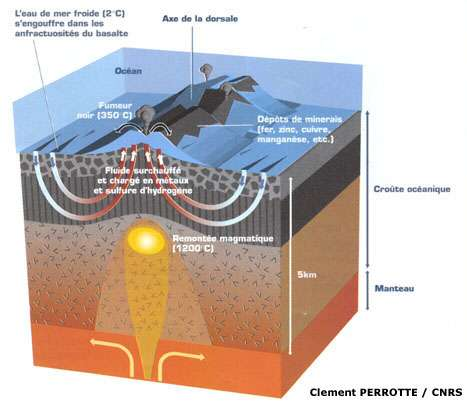 Représentation schématique du cycle de l'eau donnant naissance aux sources hydrothermales au niveau des dorsales océaniques. Les dorsales parcourent 64.000 km à la surface du Globe. Les sources d'eaux chaudes abritent une vie extraordinaire composée d'organismes adaptés à l'absence de lumière et d'oxygène. © Claire Perrotte, CNRS