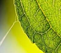 Le végétal au microscope. © DR