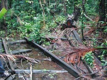 Une des causes de l'épidémie de paludisme en Guyane : l'empiètement de l'homme sur la forêt, avec la création notamment de clairières. Eremiba (2006)