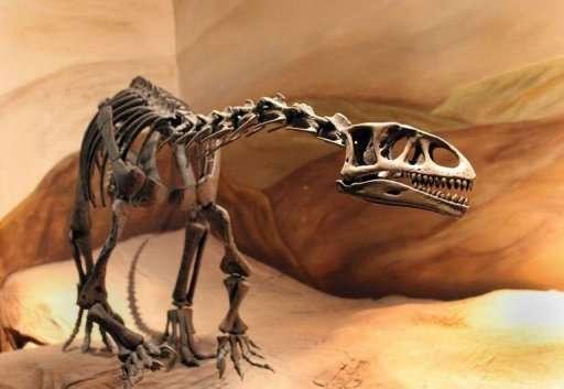 Leonerasaurus taquetrensis n'était pas bien grand mais son ossature ressemble déjà à celles des sauropodes géants qui apparaîtront des millions d'années plus tard. © MEF