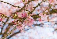 Le 20/03/2011, c'est l'équinoxe de printemps. © DR