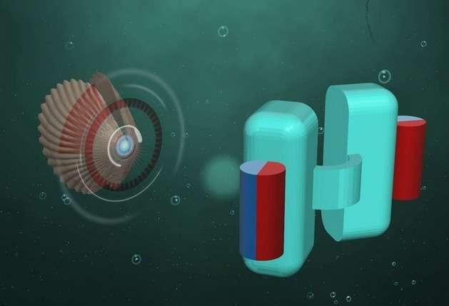 En s'inspirant du pétoncle, les chercheurs de l'institut Max Planck de Stuttgart en Allemagne ont conçu un microrobot de quelques centaines de microns qui peut nager dans les fluides corporels. Dans un avenir pas très lointain, cet engin pourrait être injecté dans le corps pour diffuser des traitements médicaux. © Max Planck Institute
