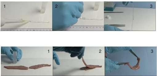 La texture à base de nanoparticules de silice permet une adhésion en quelques secondes de deux morceaux de gélatine ou de foie de veau. En (1), la solution de nanoparticules est déposée sur deux matériaux différents : sur de la gélatine (en haut) ou sur du foie de veau (en bas). En (2), les deux morceaux de gélatine ou de foie sont accolés l'un à l'autre. En (3), la solution de nanoparticules agit comme une colle qui maintient les deux bouts de gélatine ou de foie de veau solidement attachés l'un à l'autre. © Laboratoire MMC-CNRS, ESPCI