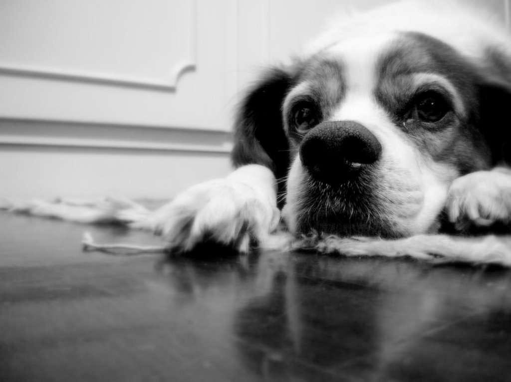 Notre avenir énergétique repose-t-il sur les déjections canines ? © grazie davvero, Flickr, CC by-SA 3.0