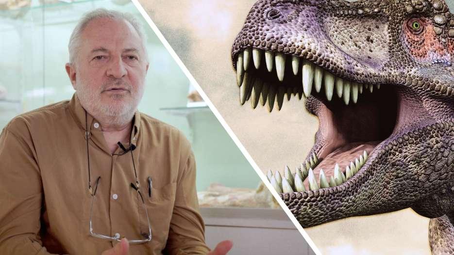 Interview : cinq idées fausses sur les dinosaures