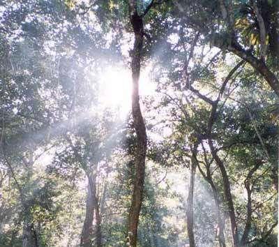 Biodiversité et consommation, un nouvel équilibre à trouver