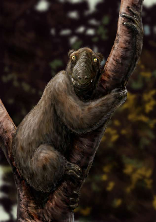 Megaladapis edwardsi est l'une des trois à six espèces de ce genre de lémurien, disparu de Madagascar à l'arrivée des colons européens il y a 500 ans. Il ne ressemblait à aucun autre primate herbivore arboricole et n'a pu survivre à la déforestation et à la chasse. © FunkMonk (Michael B. H.), Wikimedia, CC by-sa 3.0