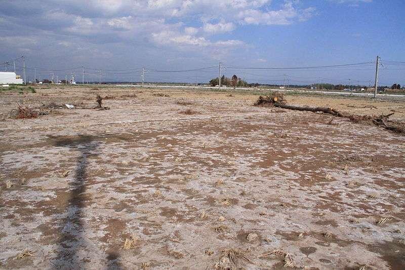 Environ 20.000 hectares de terres agricoles japonaises ont été inondées par des eaux salées durant le tsunami du 11 mars 2011. Plus de 26 millions de tonnes de déchets ont dû être retirés des champs, avant d'entreprendre un dessalage progressif des terres. © ChiefHira, Wikimedia common, CC by-sa 3.0