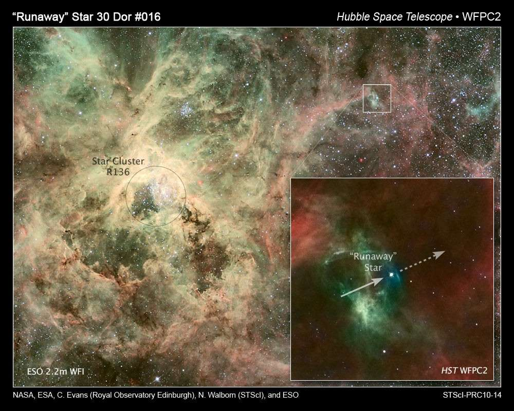 A 375 années-lumière de son berceau, une étoile massive s'enfuit à raison de 190.000 kilomètres par heure dans la nébuleuse de la Tarentule. Crédit Nasa, Esa, C. Evans (Royal Observatory, Edimbourg), N. Walborn (STScI) et Eso