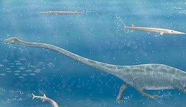 © AAAS/Science; Carin L. CainLe Dinocephalosaurus en plein effort !