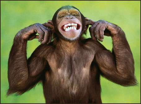 Les singes préfèrent le silence ! © Google, ClickOnMyLinks