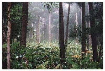 Actuellement, chaque année, entre 20.000 et 25.000 km2 de forêt sont détruits
