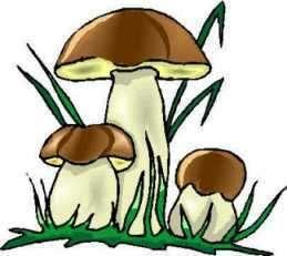 Les champignons, oubliés des modèles de réchauffement climatique ?