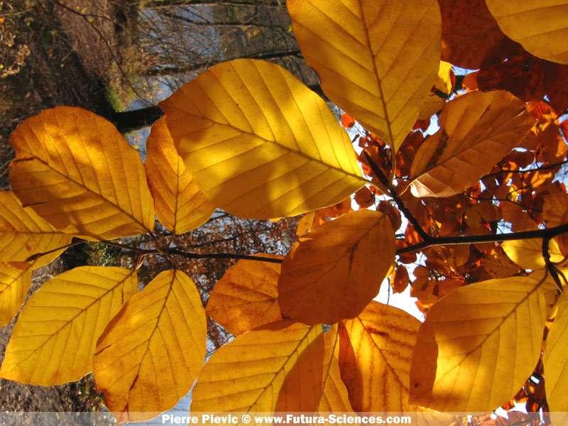 Bouquet d'automne, crédits FS.