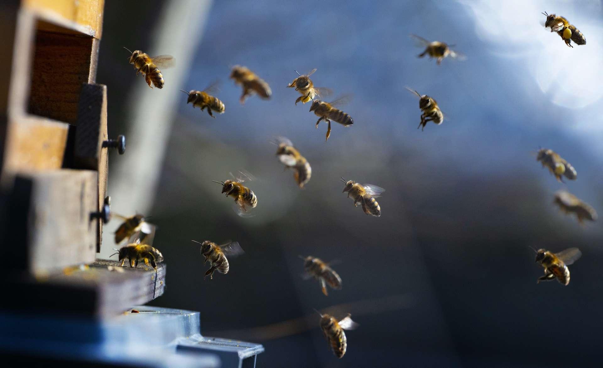 Deux pesticides ayant le même mode d'action que les néonicotinoïdes sont désormais interdits. © Vera Kuttelvaserova, Adobe Stock