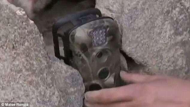 Des caméras infrarouges sont cachées dans les roches à plus de 4.000 m d'altitude dans les montagnes Burhan Budai, en Chine. Elles ont permis de capturer des images nocturnes de l'animal en octobre 2012. © Matse Rangja