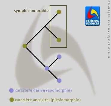 La symplésiomorphie est le partage d'une plésiomorphie. © Bruno Scala/Futura-Sciences