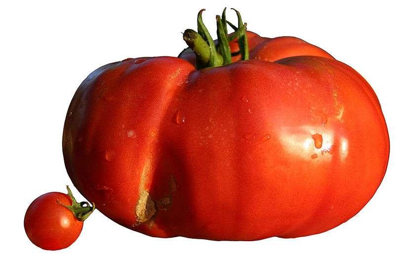 Rougir comme une tomate est un processus naturel qui peut être handicapant. © Wikimedia Commons