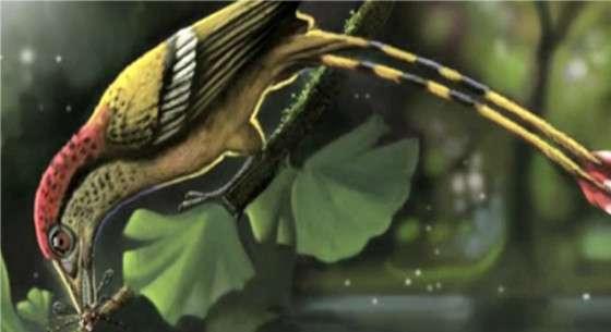 Le petit oiseau coloré avait des dents. Il vivait au Gondwana il y a environ 115 millions d'années, au milieu des dinosaures, et appartenait à une grande famille d'animaux à plumes. © Deverson Pepi, capture vidéo via Live Science