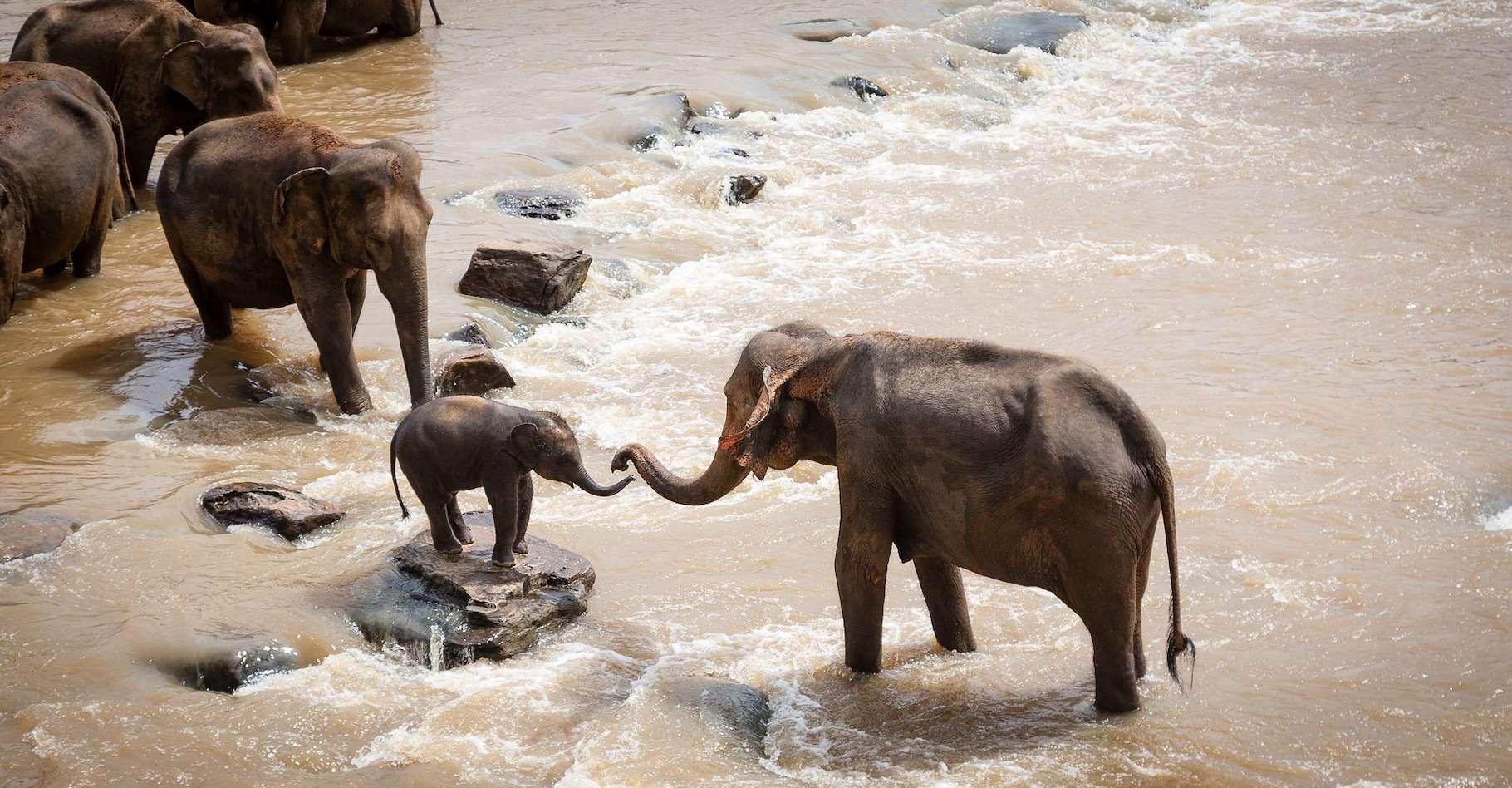 Les éléphants, que ce soit en Afrique ou en Asie, restent menacés par les activités humaines. © luxstorm, Pixabay License