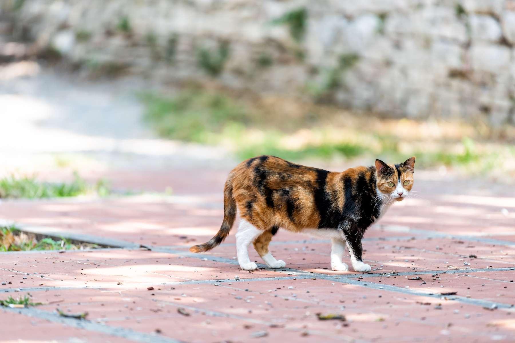 Un chat a contracté un virus rarissime proche de la rage en Italie. © Kristina Blokhin, Adobe Stock