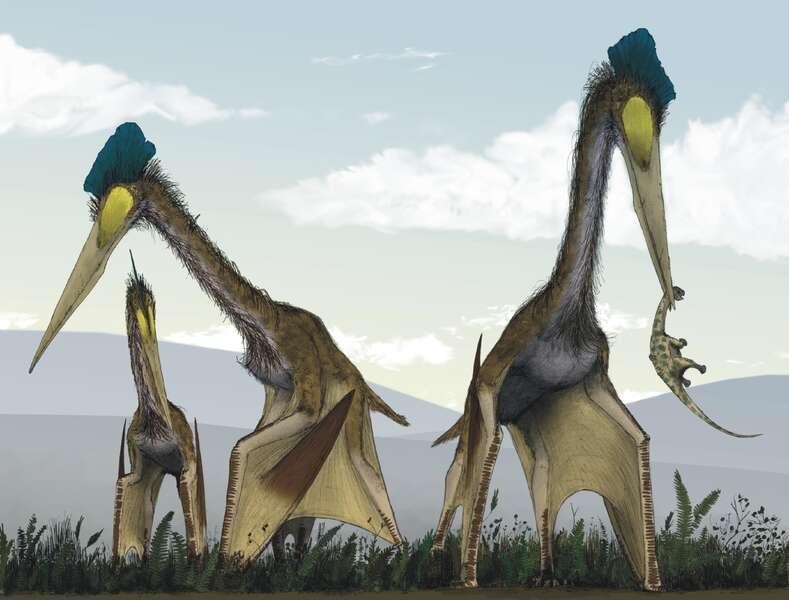 Les Quetzalcoaltus marchaient sur leurs quatre pattes, des empreintes fossilisées en attestent. Ils se nourrissaient probablement, selon la dernière hypothèse en date, de petits mammifères capturés sur terre. © Mark Witton et Darren Naish 2008, Plos One