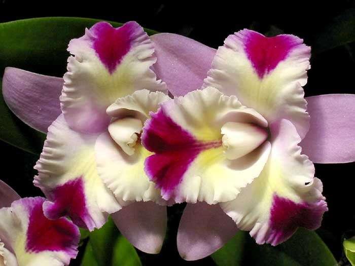 Plantes cultivées : l'orchidée progresse, les habitudes changent