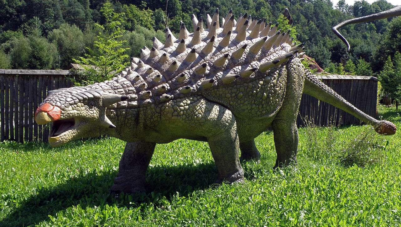 L'Ankylosaurus, avec ses huit mètres de long et ses six tonnes, vivait à la même époque que le terrible Tyrannosaurus rex et devait être bien équipé pour résister à ses mâchoires surpuissantes. © Alina Zienowicz, Wikipédia, cc by sa 3.0