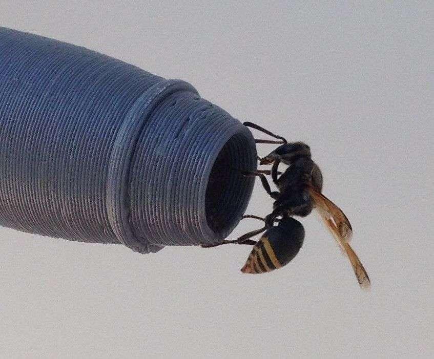 Les guêpes construisent leur nid dans les entrées des sondes qui servent à mesurer les flux d'air. © House et al. (2020) Plos One