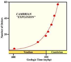 L'explosion cambrienne. Crédit : Alan Kazlev