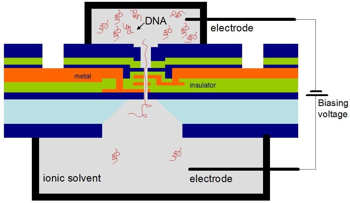 Schéma de principe du transistor à ADN. © IBM