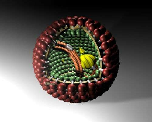 Une représentation du bornavirus. Crédit : Wikipédia