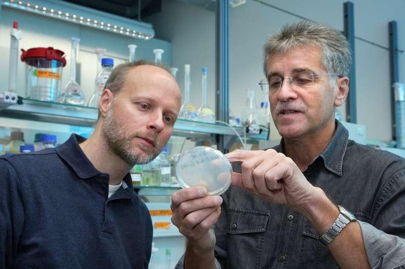 Thore Rohwerder (à gauche) et Roland Müller devant une boîte de Pétri, où des bactéries ont révélé une nouvelle manière de produire du plastique. © Klaus-D. Sonntag/fotoplusdesign