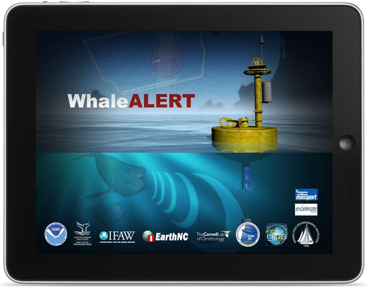L'application Whale Alert est gratuite. Bien sûr, les applications en temps réel ne fonctionnent qu'avec une connexion à Internet mais de nombreux navires possèdent désormais ce genre d'équipements. © Stellwagen Bank National Marine Sanctuary Web Group