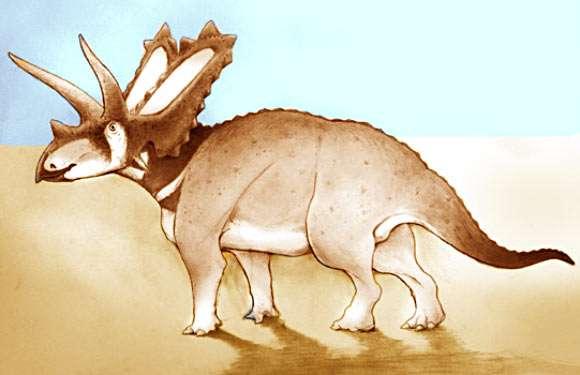Une reconstitution d'artiste d'Aquilonius pentaceratops. Ce cératopsidé vivait il y a environ 75 millions d'années dans une région occupée aujourd'hui par les badlands de l'Alberta au Canada. © University of Bath