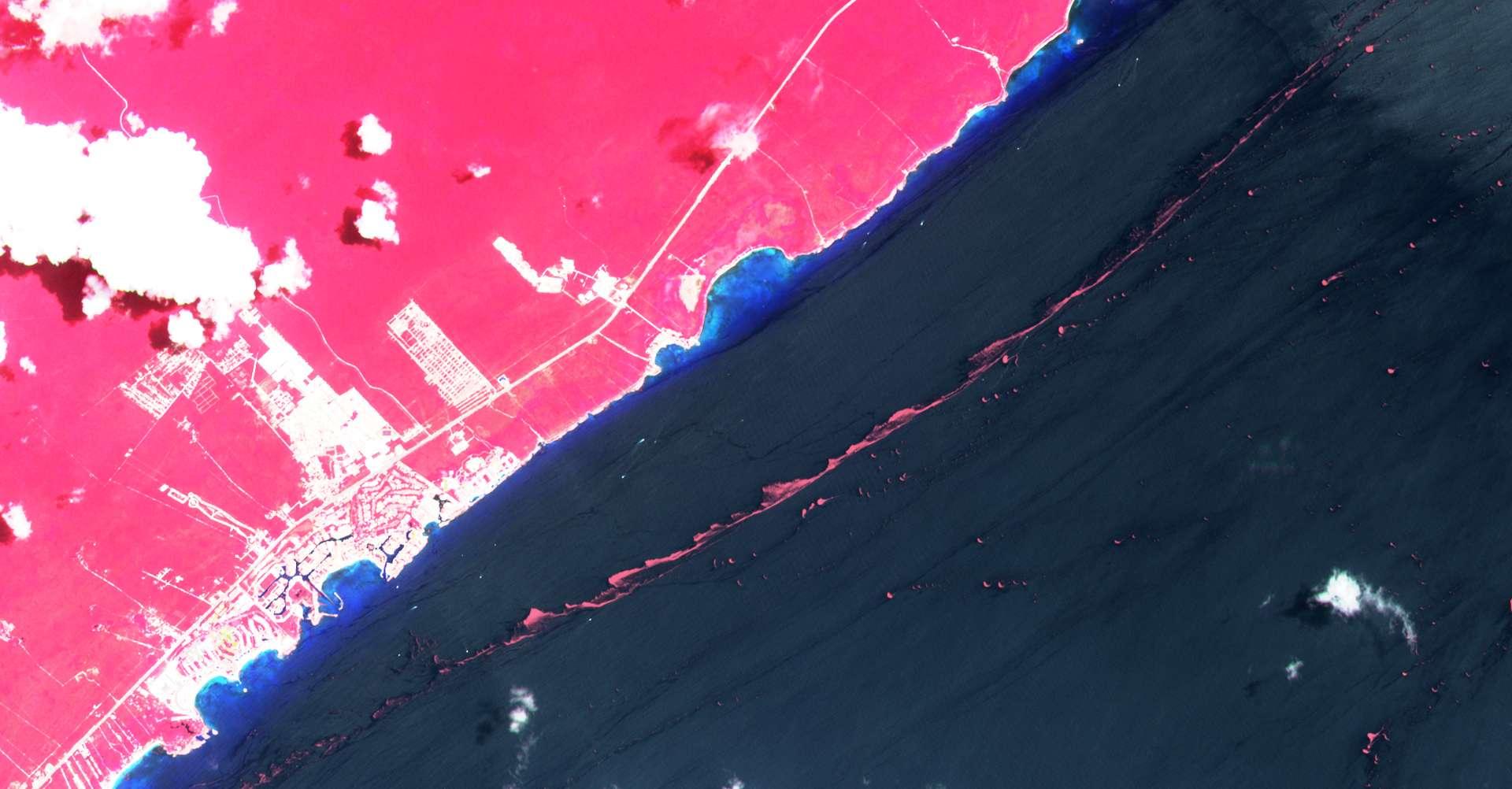 En rose, la ceinture de nappe de sargasses qui flottent au large de Cancùn au Mexique. © ESA