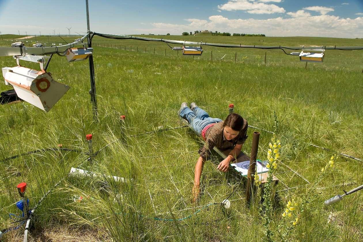 Les parcelles enrichies en CO2 ont vu les plantes qui y poussaient croître plus longuement que dans les conditions climatiques actuelles. © Steve Ausmus