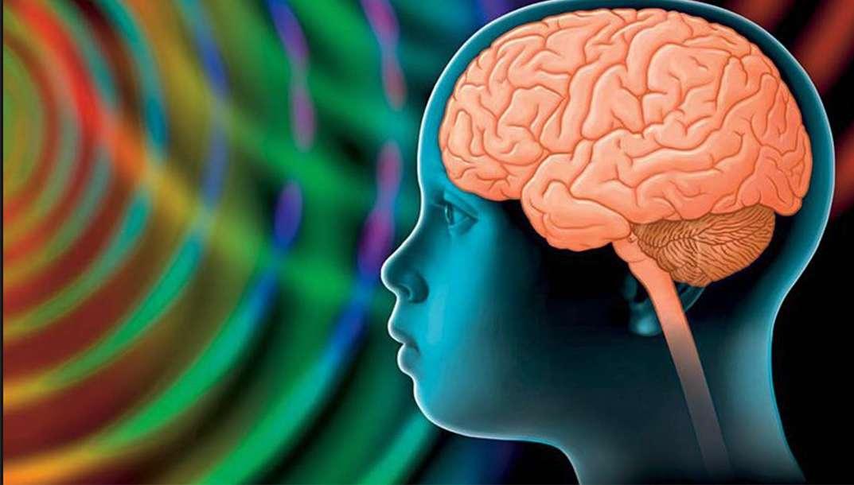 « Le Cerveau des enfants, un potentiel infini ? » : le cerveau se développe lentement