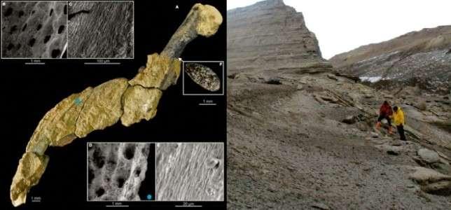 Des chercheurs ont découvert l'aile articulée d'un manchot datant de 43 millions d'années, sur l'île de Marambio, en Antarctique. © Instituto Antártico Argentino, AFP