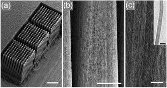 À gauche, le bloc de 1,2 mm de long portant les faisceaux de nanotubes (la barre mesure 500 micromètres). Au milieu, une vue d'une tige, légèrement pyramidale (la barre mesure 50 micromètres). À droite, détail des nanotubes alignés (la barre mesure 5 micr
