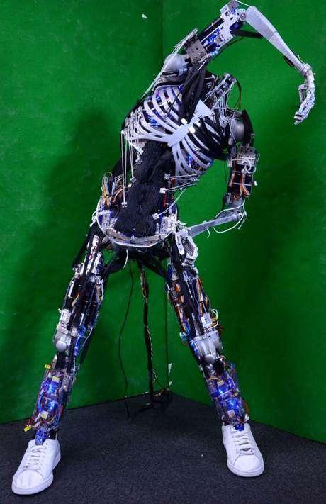 Kenshiro est le 5e robot musculo-squelettique produit par le Johou Systems Kougaku Laboratory. Son développement a débuté en 2012. © Université de Tokyo