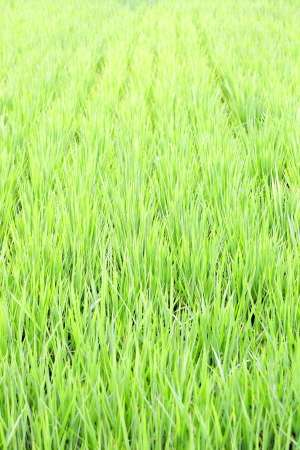Les surfaces en agriculture bio sont principalement consacrées aux pâturages, aux cultures fourragères et aux céréales. © jeffchen