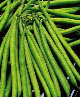 Les haricots filets sont une des variétés de haricots verts. © DR