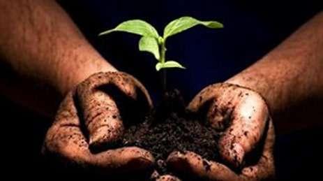 Pour une plante, le substrat peut être de la vase, des granulats... © DR