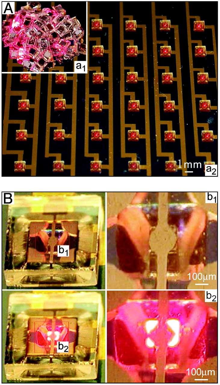Le test des Led fabriquées par auto-assemblage (en une seule étape). En A, on voit une partie des 200 Led (image a2), qui ont été montées à la main après leur auto-assemblage (a1). En B, on remarque qu'elles s'allument (images b2) et les contacts établis sont visibles sur les agrandissements (images b1 et b2 de droite). © Heiko O. Jacobs et al.