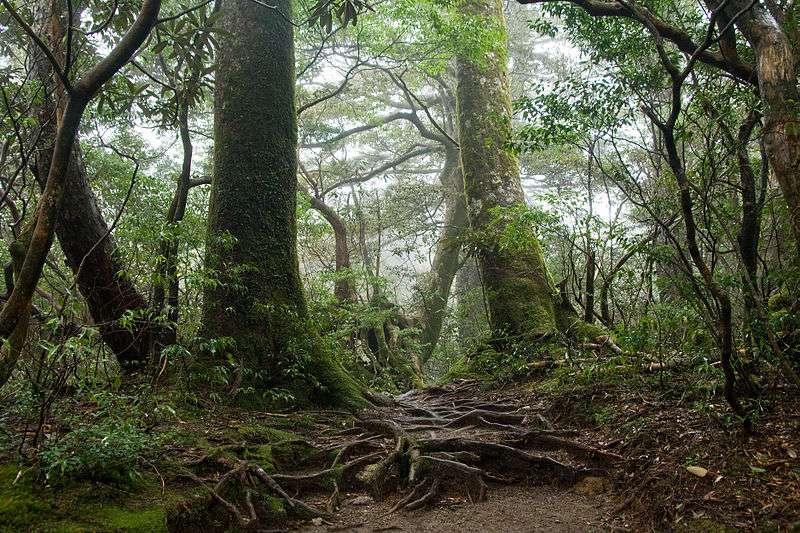 Une estimation de la biomasse présente dans les forêts pourrait permettre de déterminer la quantité de bois utilisable comme source d'énergie. © Σ64, Wikipédia, CC by-sa 3.0